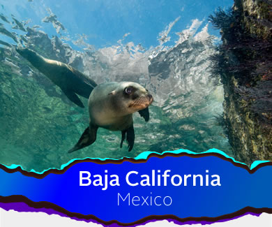 Sealion off La Paz, Baja California
